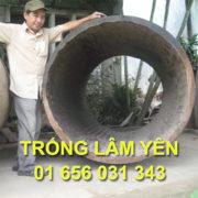 0012_trong_chua_trong_lam_yen